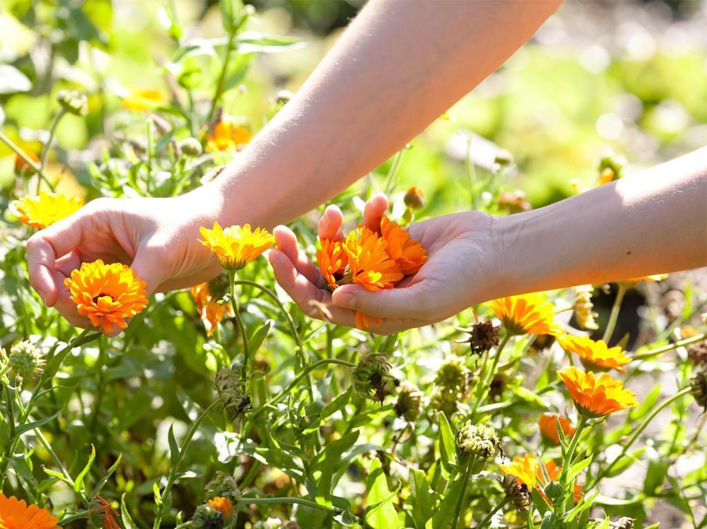 Kräuter Spa - Frische Kräuter aus dem Garten vom Wilden Eder